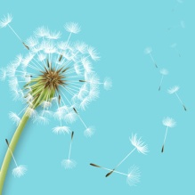 shiny-dandelion-vector-backgrounds-cover.png